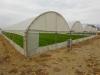 Атрактивен имот с работещи оранжерии в близост до Сандански